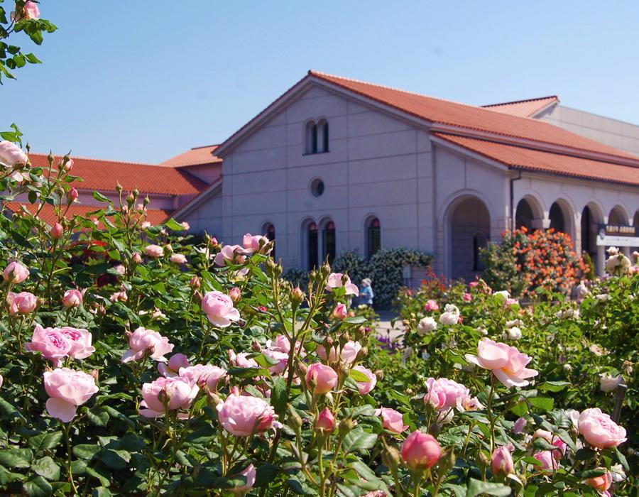 玫瑰園(豊科近代美術館) イメージ写真