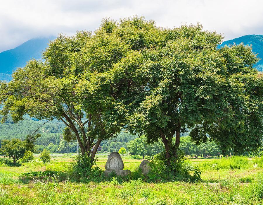 日本的原始風景由自行車訪問 イメージ写真