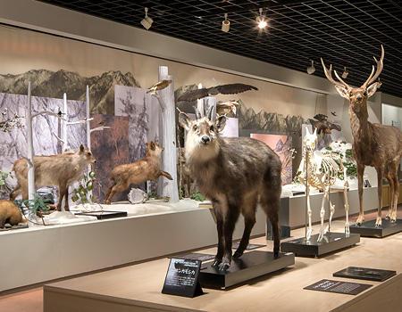 市立大町山岳博物館 イメージ写真
