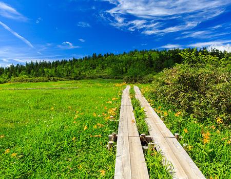 栂池自然園 イメージ写真
