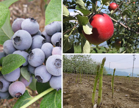 収穫体験 写真